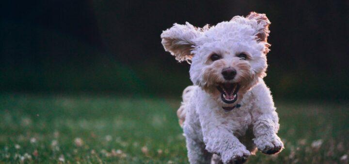 Hold øje med din hund på afstand